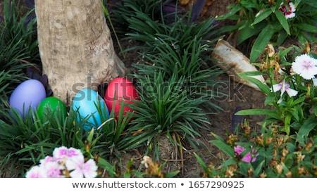 paaseieren · narcissen · bloemen · oude · houten · Pasen - stockfoto © monkey_business