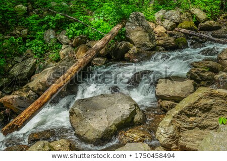 Stream with boulder and log Stock photo © njnightsky