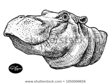 Hippo head with ethnic ornament Stock photo © ulyankin