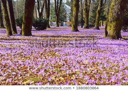 springtime in town Stock photo © Hofmeester