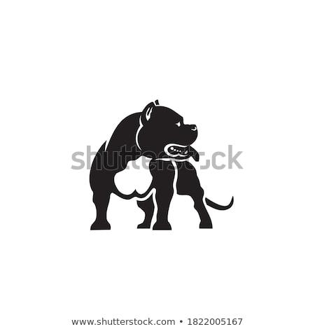白 · アメリカン · 犬 · 頭 · 爪 · ペット - ストックフォト © cynoclub