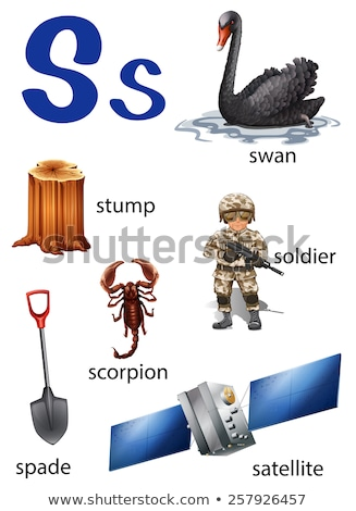 Flashcard letter S is for swan Stock photo © bluering
