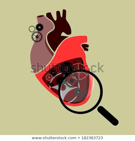 heart with gears human heart anatomy stock photo © tefi