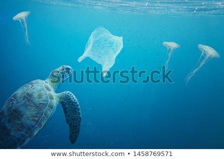 多くの · 魚 · スイミング · 海 · 実例 · 自然 - ストックフォト © bluering