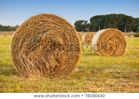 Zöld legelő széna tekercsek szabadtér Stock fotó © svetography