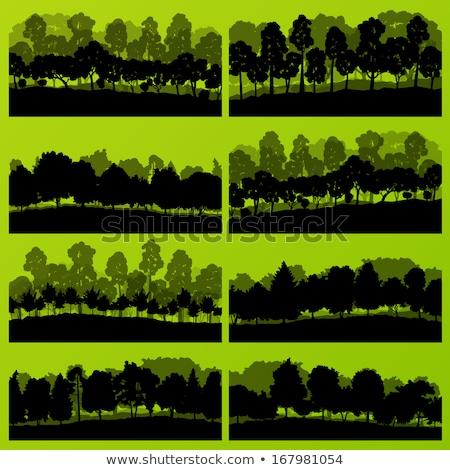 verão · paisagem · bordo · árvore · montanhas · verde - foto stock © kotenko