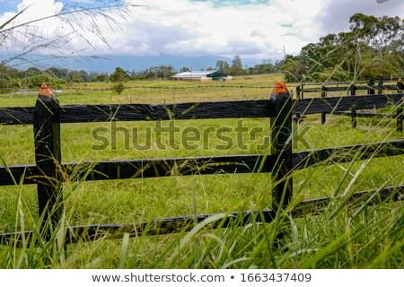 old farm gateway Stock photo © martin33