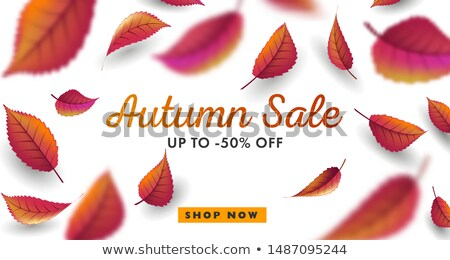 autumn season sale banner design with leaves Stock photo © SArts