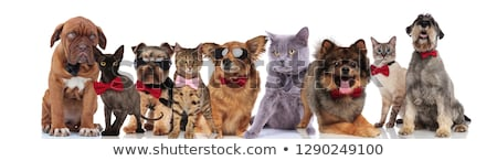 elegant team of nine adorable pets on white background Stock photo © feedough