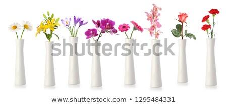 Different flowers in vases Stock photo © dariazu