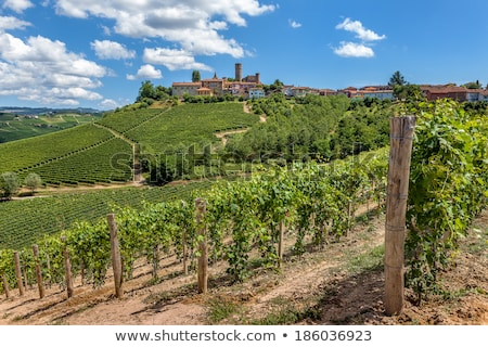 vineyards and small town castiglione falletto italy stock photo © rglinsky77