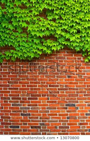Borostyán öreg grunge rusztikus város textúra Stock fotó © sweetcrisis