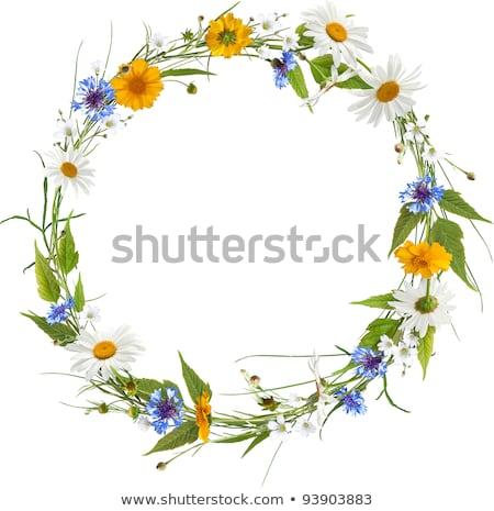 Frame as ring of yellow flowers Stock photo © boroda