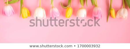 ピンク · 鮮度 · 花 · 午前 · 露 · 自然 - ストックフォト © linfernum