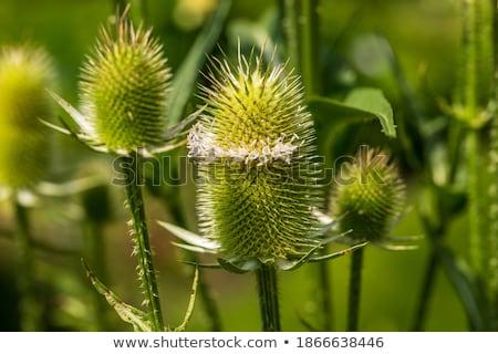 été vert parc objet croissant fleurs sauvages Photo stock © arturasker