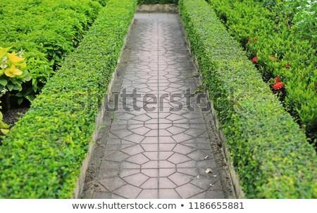 Field of paved bricks Stock photo © DonLand