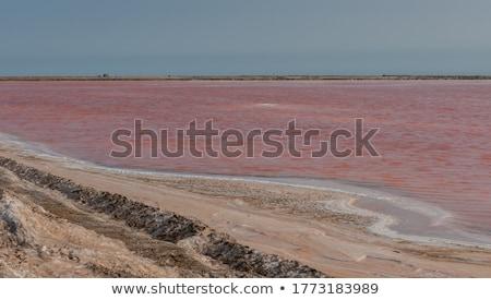 соль Намибия Африка морем океана озеро Сток-фото © imagex