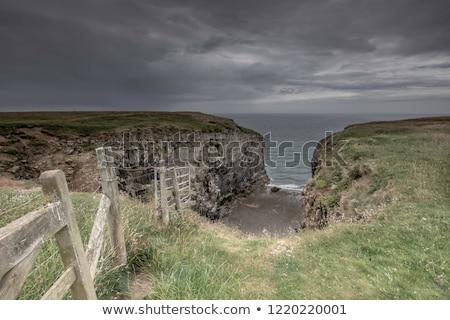 Wapień Urwisko morza ogromny drzewo charakter Zdjęcia stock © smithore