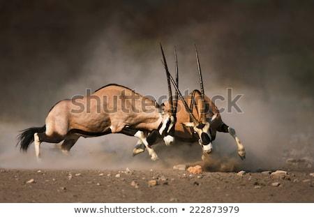 Afrika · szafari · sziluettek · vadállatok · szürkület · naplemente - stock fotó © derocz