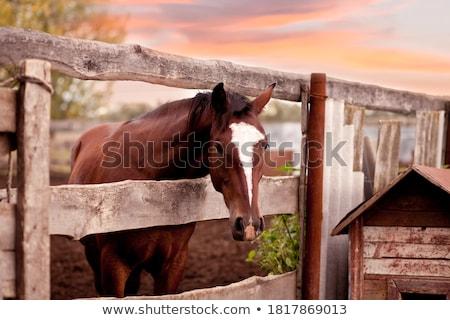 лошади · за · забор · закат · продовольствие · пейзаж - Сток-фото © kayco
