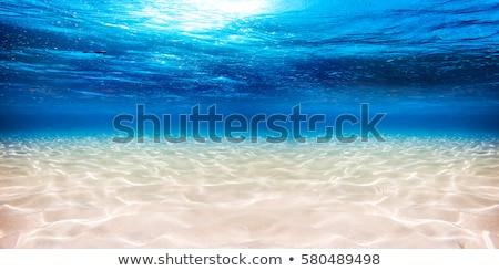 Minta víz homokos tengerpart Balti-tenger háttér nyár Stock fotó © meinzahn