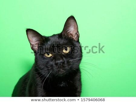 Portrait of a skeptical Stock photo © gemenacom