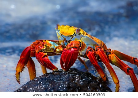 Kırmızı plaj okyanus mavi ada hayvan Stok fotoğraf © chris2766