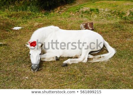 ló · nyár · testtartás · hegyek · gyönyörű · kilátás - stock fotó © lunamarina