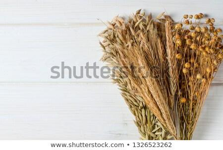 Kenyér egyéb tárgyak vidéki élet cipó Stock fotó © Phantom1311
