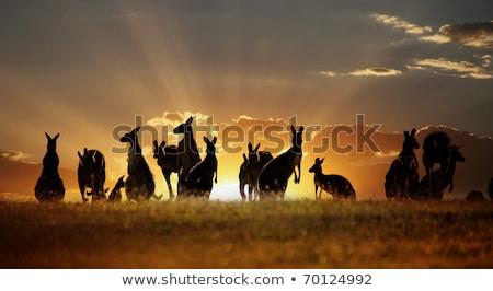 canguro · segno · cautela · illustrazione · tramonto · panorama - foto d'archivio © adrenalina