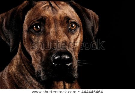 Belo escuro foto estúdio preto engraçado Foto stock © vauvau