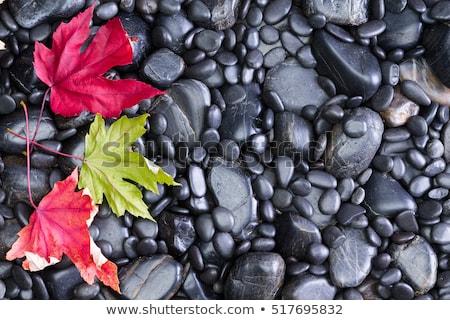 Ansicht Blätter schwarz Fluss Felsen unterschiedlich Stock foto © ozgur
