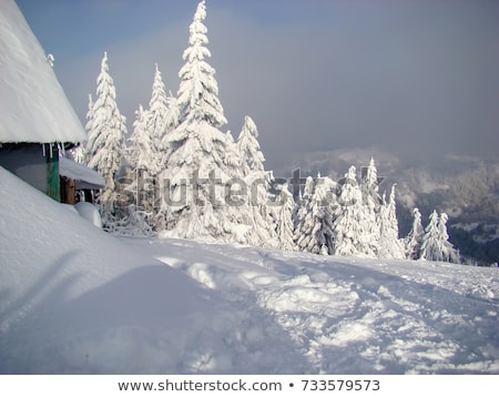 winter landscape with green fir trees covered with snow and wint stock photo © vlad_star
