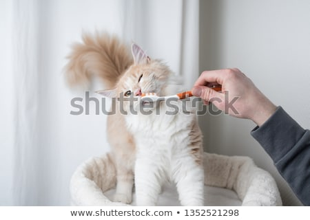 teethbrush and cat stock photo © cynoclub