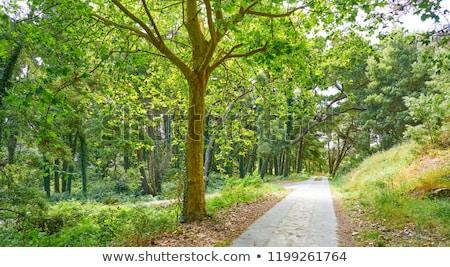 Eilanden bos galicië Spanje landschap bomen Stockfoto © lunamarina