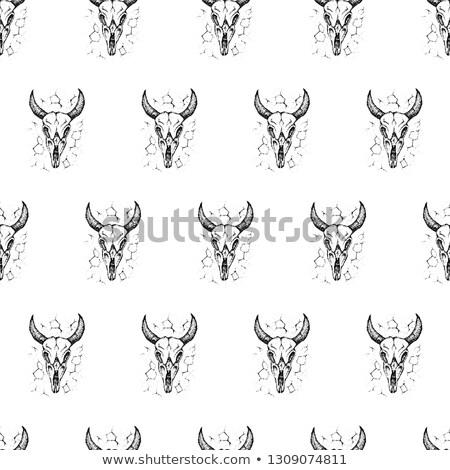 touro · crânio · nosso · caneta · mão · desenho - foto stock © anna_leni