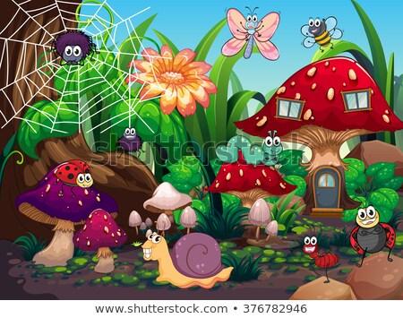 Arana setas casa ilustración madera naturaleza Foto stock © colematt