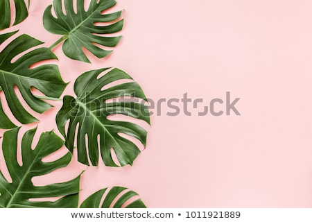 Summer background with monstera leaves Stock photo © furmanphoto