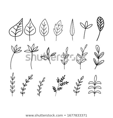 zestaw · pozostawia · zielony · liść · bazgroły · liści - zdjęcia stock © marish