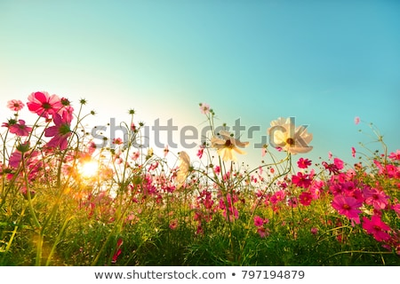 Legelő virágok fehér fából készült sekély mélységélesség Stock fotó © AGfoto