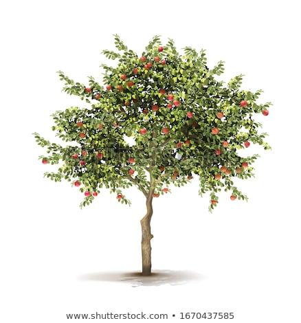 owoców · drzew · zestaw · różny · kwiat · owoce - zdjęcia stock © robuart
