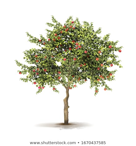 ayarlamak · elma · ağaçlar · boyalı · küçük · elma · ağacı - stok fotoğraf © robuart