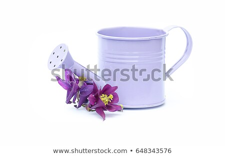 Watering Can Isolated Metal Vessel to Pour Plants Stock photo © robuart