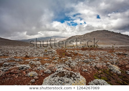 Bale Mountain landscape, Ethiopia Stock photo © artush