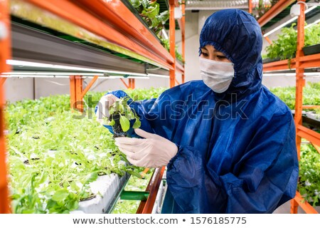 Researchers in protective workwear selecting new sorts of horticultural plants Stock photo © pressmaster