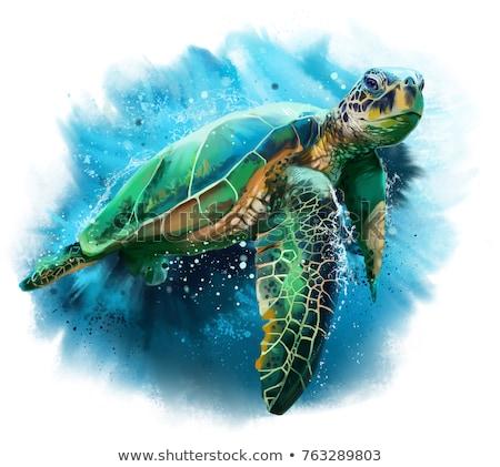 Illusztráció teknősök pár kagyló kerítés rajz Stock fotó © adrenalina