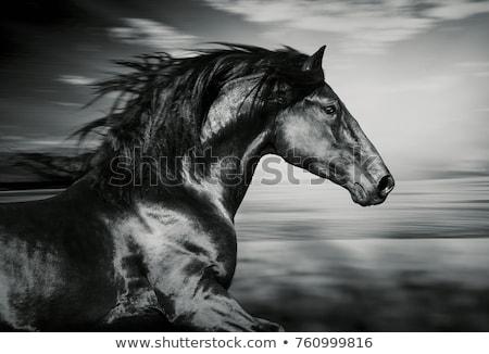 Fekete ló föld kilátás gyönyörű legelő Stock fotó © ldambies