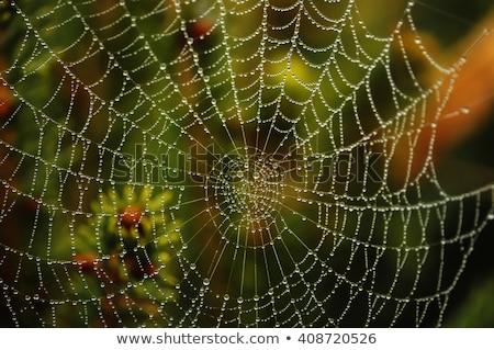 Wassertropfen Spinnennetz Herbst Foto Design Lichter Stock foto © johnnychaos