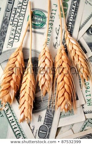 Złoty pszenicy ceny finansów roślin Zdjęcia stock © illustrart