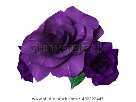 pourpre · humide · rose · résumé · belle · macro - photo stock © mahout